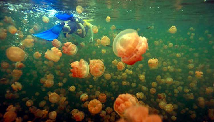Swimming with Jellyfish in Palau, Micronesia