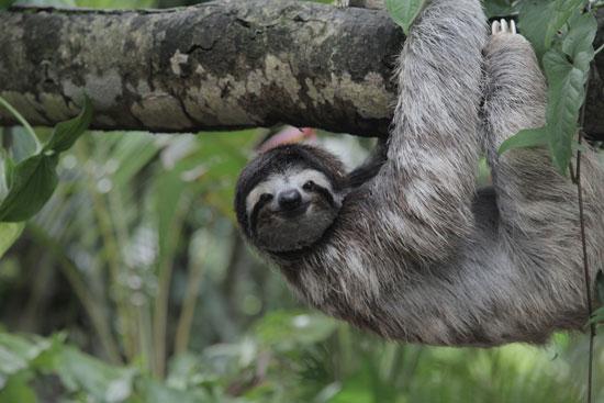 Costa Rica is incredibly bio diverse.