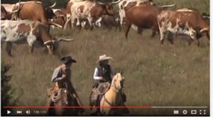 Video: Cattle Towns and Cowboys, Kansas and The Old West