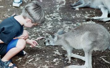 Family Travel in in Sydney