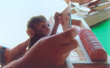 Baby Gomez tries his hand at cards on the island of Palau. Photo courtesy of Alex Shueshunoff