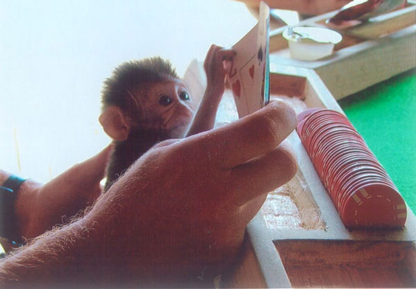 "In ""A Beginner's Guide to Paradise,"" Baby Gomez tries his hand at cards on the island of Palau. Photo courtesy of Alex Shueshunoff"