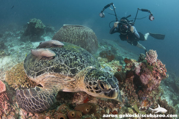 The dive site is home to many sea turtles.