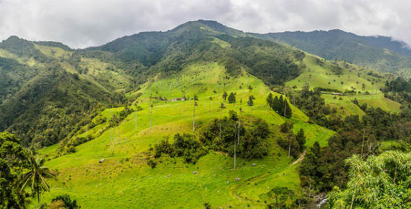 Cocora Valley is a famous National Park.