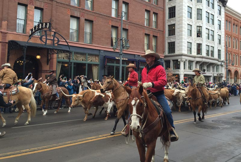 Each January, the National Western Show has a parade through Denver to kick off the event. Photo by Janna Graber