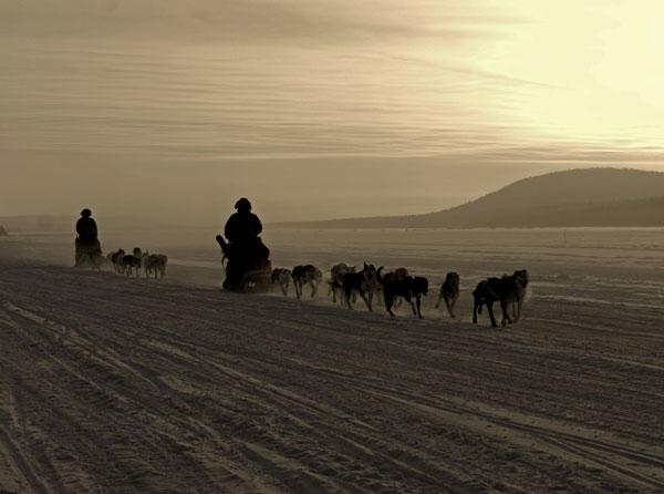 Dog sledding in Lapland. Photo by Markus Alatalo, icehotel.com