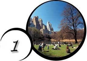 Central Park and other parks in NYC