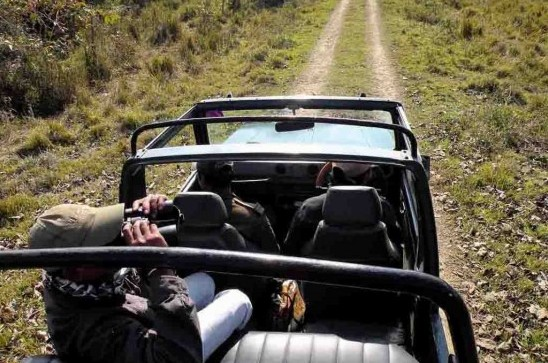 Travel by jeep while on safari in India.