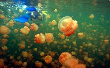 Snorkeling with jellyfish in Palau