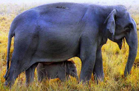Mother and baby elephant. Photo by Annie Palovcik