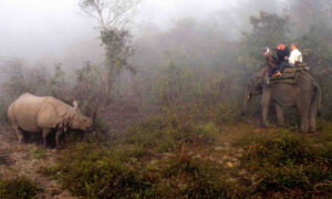 Rhinos at Dawn: Safari in India