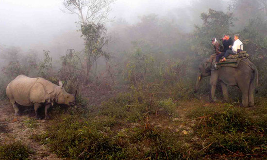 Rhinos at Dawn: Safari in India
