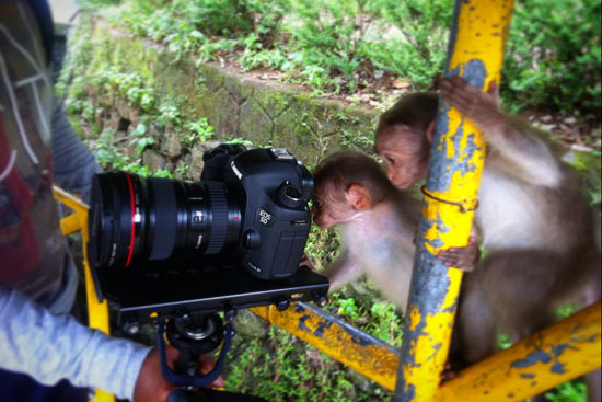 Curious monkeys check out the camera. It took an eight-hour bus ride to reach Kumily. Photo by Anup Baria