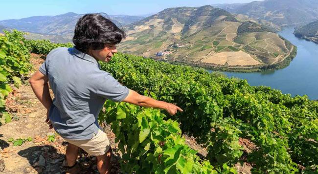 Quinta das Carvalhas - Wine Tours in Portugal
