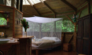 Three Nights in a Tree: Finca Bellavista, Costa Rica