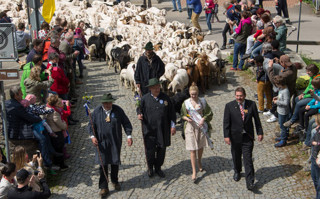 The town mayor and Lamb Queen lead the process through town. Photo by Janna Graber