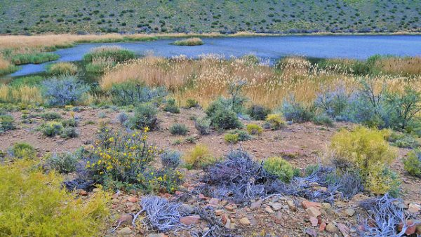 Colors of Klein Karoo Sanbona Wildlife Reserve. Photo by zol m