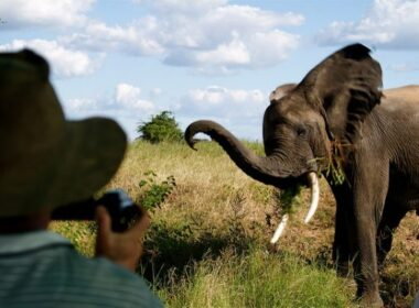 An elephant in Africa. Photo by Finnur Magnusson