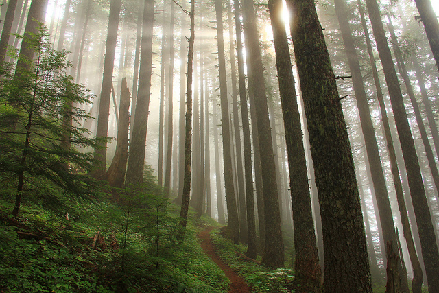 Pacific Northwest forest.
