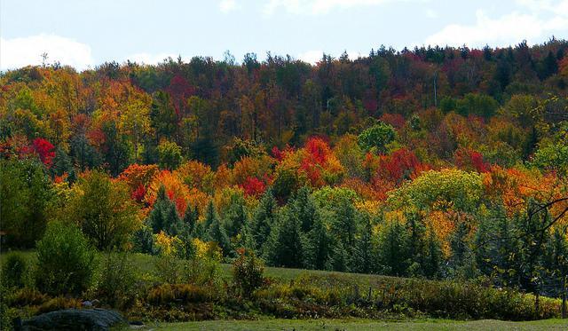 Vermont colors.