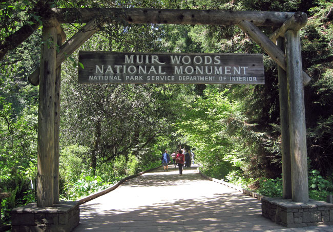 Visitors can take a City Sightseeing San Francisco bus to walk among the giant redwoods in beautiful Muir Woods, a national monument north of the Golden Gate Bridge. Photo by Pat Woods
