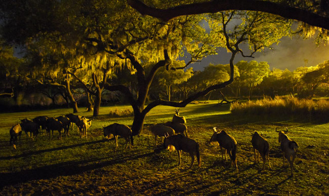 Kilimanjaro Safaris is now open after dark, when you can experience the animals in a whole new way. Photo by Todd Anderson