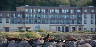 Sea lions outside our hotel in Astoria. Photo by Jim Pond