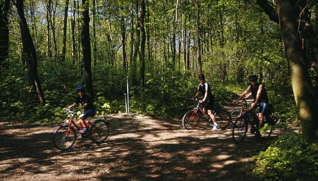 Cycling in the Vienna Woods. ©WienTourismus / Popp & Hackner