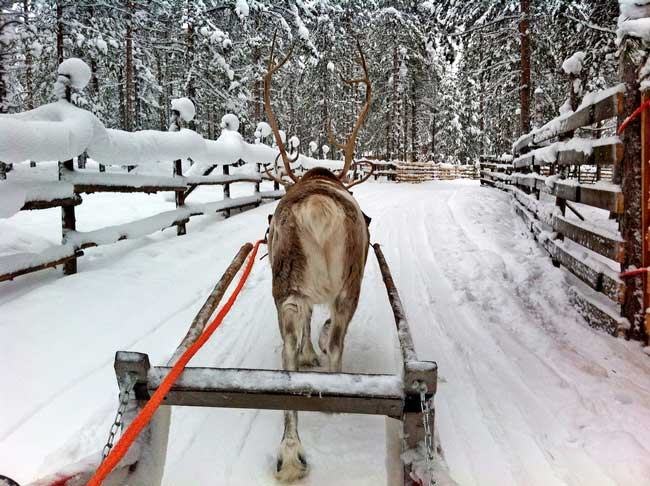 Learning to drive a sleigh. Flickr/zsoolt