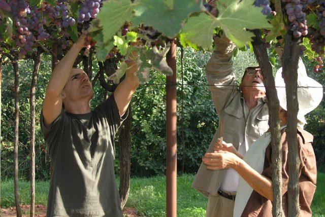 Some small farms or vineyards offer rooms in exchange for help. Flickr/Heleen van Vliet