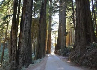 Jedidiah Smith Redwoods State Park. Photo by Jim Pond