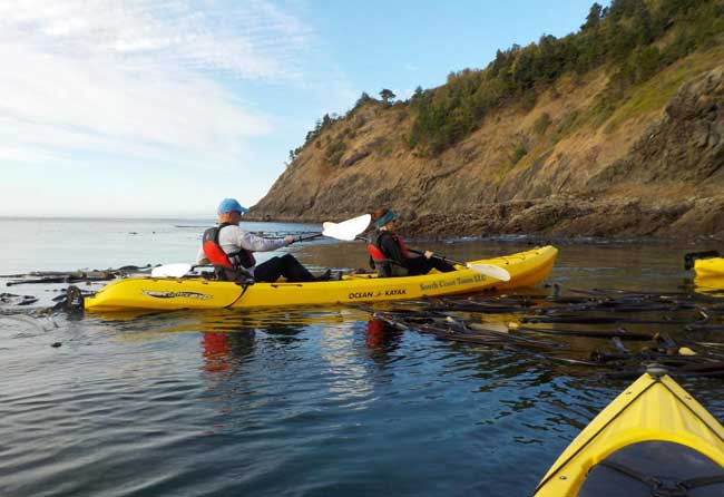 Kayaking with Gray Whales on the Southern Coast of Oregon