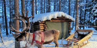 Reindeer sleigh rides in Finland are something you'll never forget. Flickr/Heather Sunderland