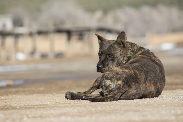Several dogs roamed freely around the pueblo.
