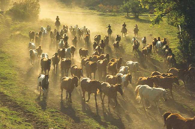 Eaton's Ranch. Photo courtesy Eaton's Ranch