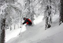 Powder in the glades. Photo by Dino Vournas Ski Santa Fe