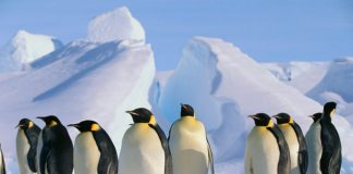 Penguins in Antarctica: Cruise Antartica