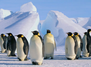Penguins in Antarctica: Cruise Antartica