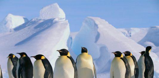 Antarctica: Cruising the Continent