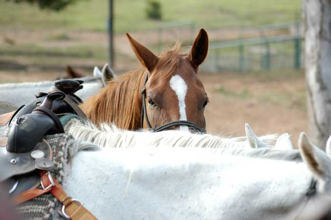 Best dude ranches - Horses wait for their riders at Horseshoe Canyon Ranch in Arkansas. Photo by Horseshoe Canyon Ranch