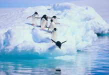Travel in Antarctica