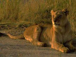 Volunteer vacations in Africa