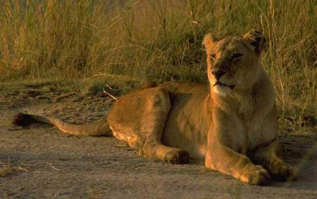 Volunteer Vacations: Best Places to Volunteer with Wildlife