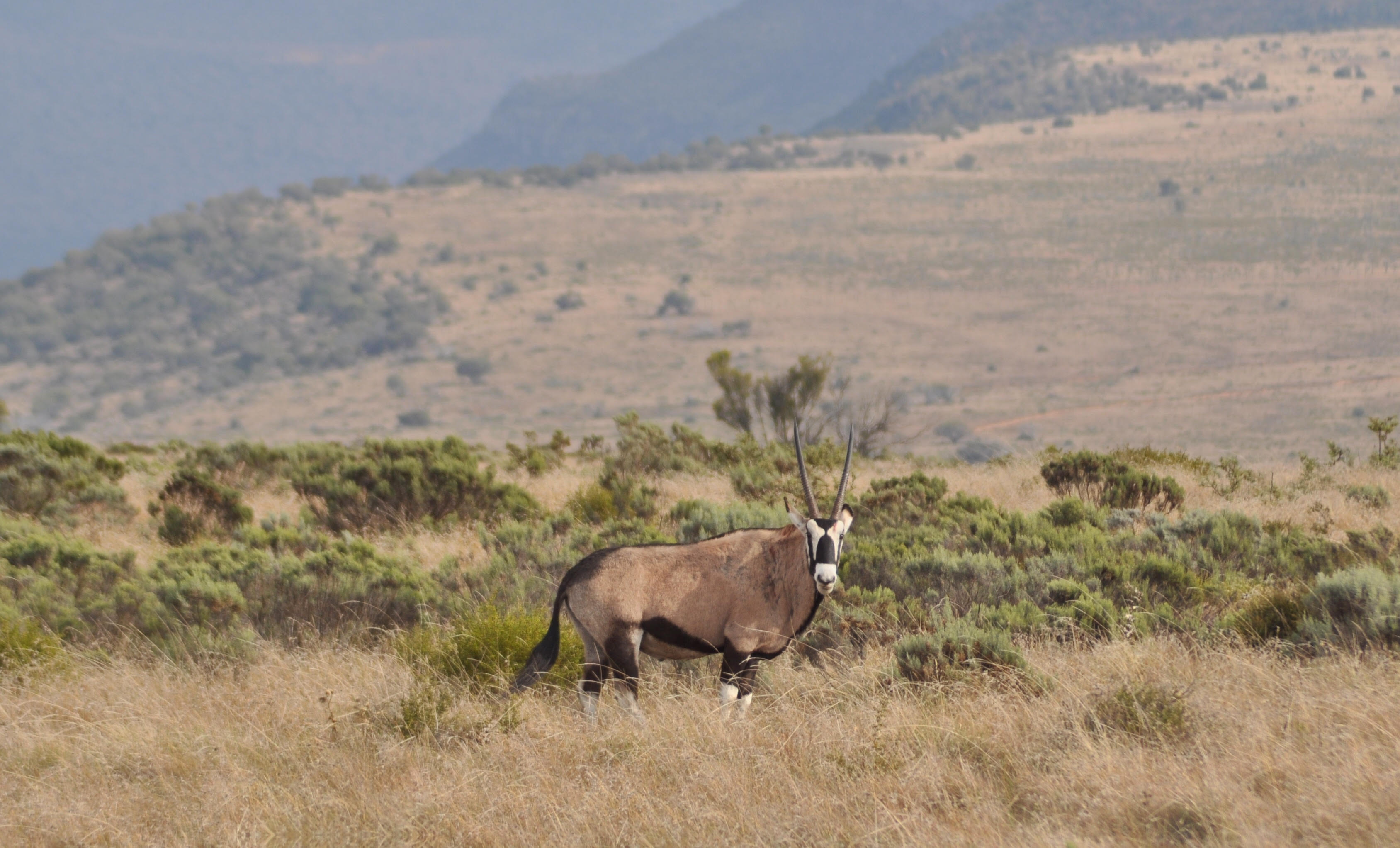 The Great Karoo is rich in wildlife. Photo by Imogene Robinson