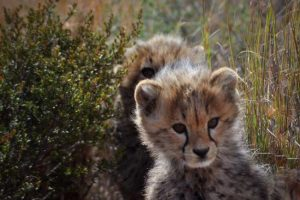 Learning to Hit Pause: Safari in South Africa