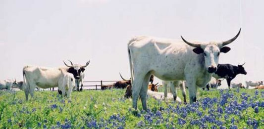 Springtime in Texas: Bluebonnet Tour