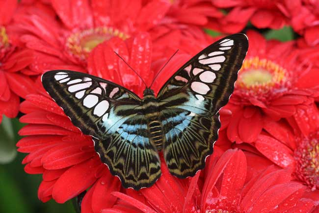 Butterfly Garden at Singapore's Changi Airport. Flickr/Fiona Thomson