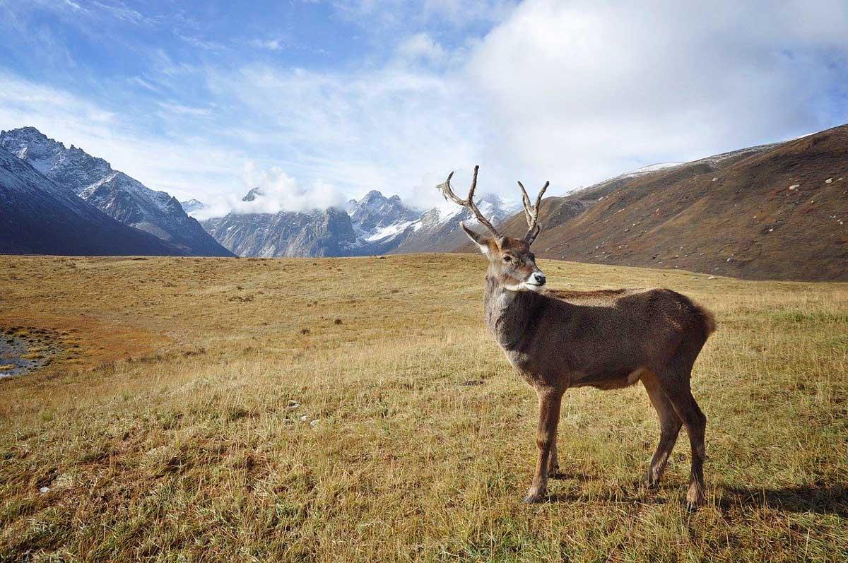 Alaska Adventure: Exploring America's 49th State