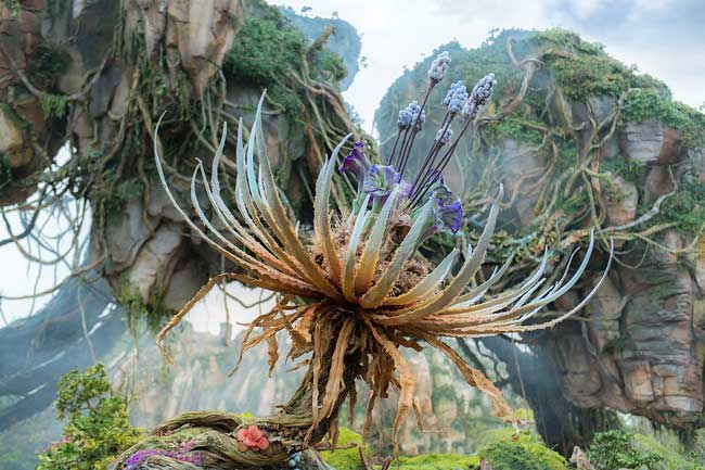 Pandora - The World of the Avatar is the newest addition to Disney's Animal Kingdom. Photo by David Roark
