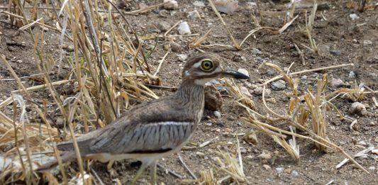 Birds 101: From My Backyard to Serengeti National Park
